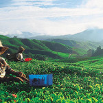Cameron Highlands Attractions